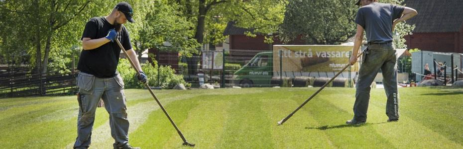 Lägga färdig gräsmatta på rulle